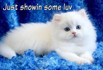 Dear sweet Shirin