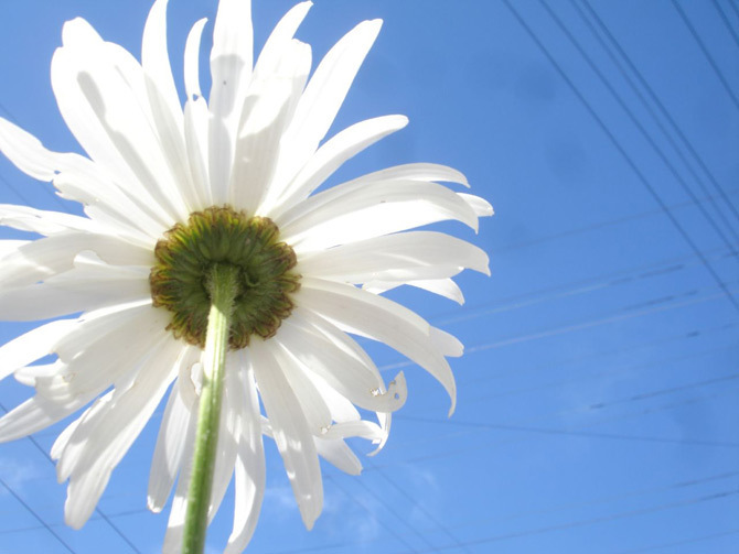 Gorgeous flowers - God-The creator Photo (17143742) - Fanpop