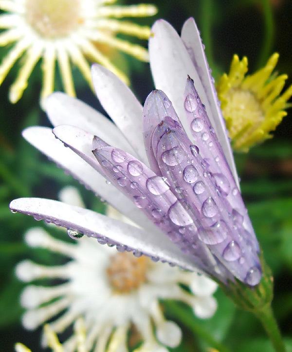 Gorgeous flowers - God-The creator Photo (17143757) - Fanpop