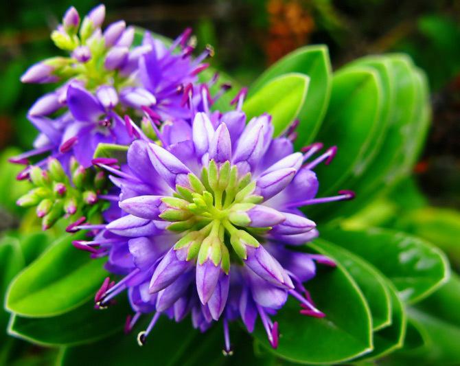 Gorgeous Bunga