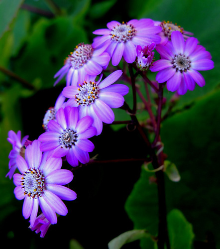 Gorgeous flores