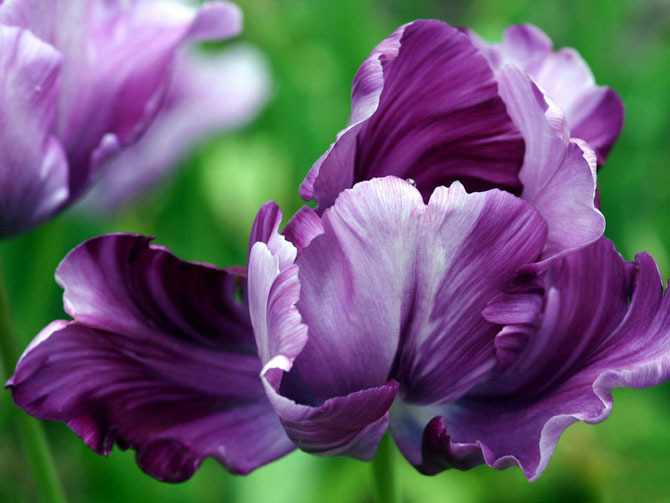 Gorgeous flowers - God-The creator Photo (17143773) - Fanpop