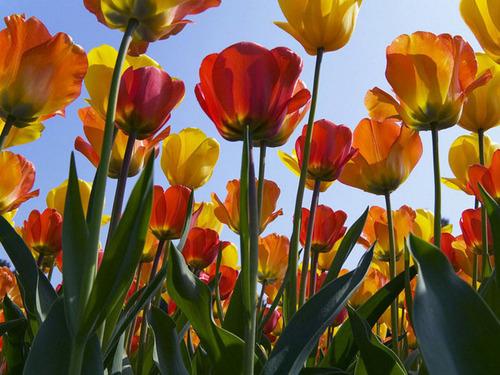 Gorgeous Blumen