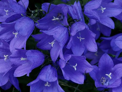 Gorgeous 꽃