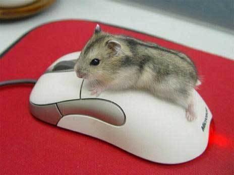 Hamsters wallpaper called Hamhamster