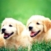 Icons! :D - dogs icon