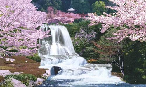 Sagura 일본