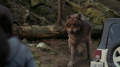 Taylor Lautner Stills from 'Bella & The Wolf' - taylor-lautner Screencap
