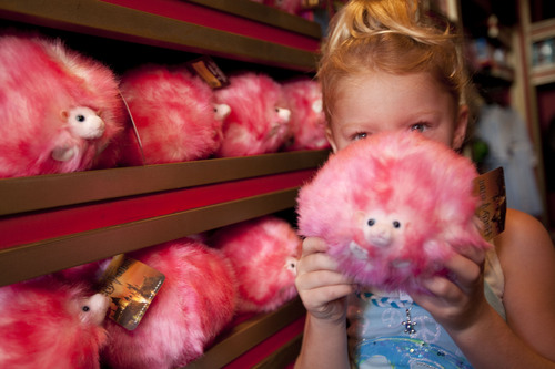 a little girl with her new pygmy puff