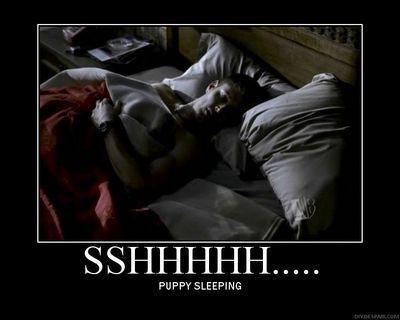 cachorro, filhote de cachorro sleeping