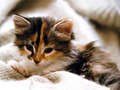 Adorable kitties :)