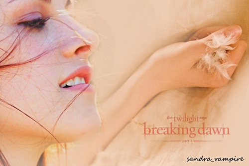 Breaking Dawn-Honeymoon