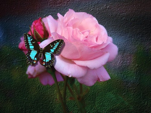 Butterflies پیپر وال with a bouquet called تیتلی And Rose