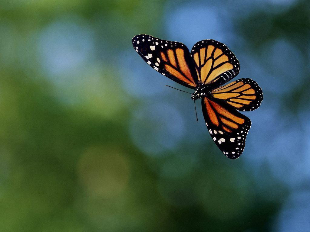 Http Www Fanpop Com Clubs Butterflies Images 17274855 Title Butterfly Photo
