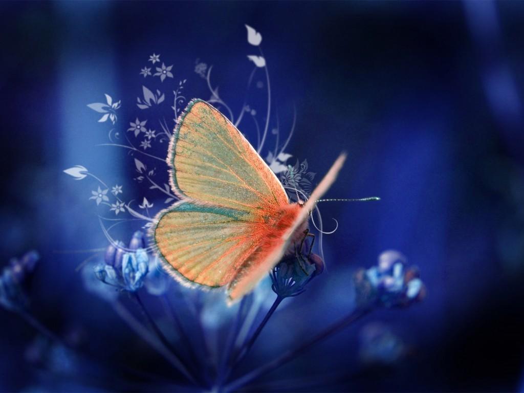 beautiful butterfly hd desktop - photo #41