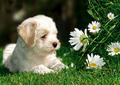Cute pups!