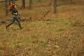 Foxface Running