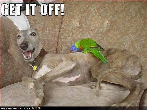 Funny/Cute Greyhounds :)