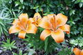 God's beautiful naranja flores