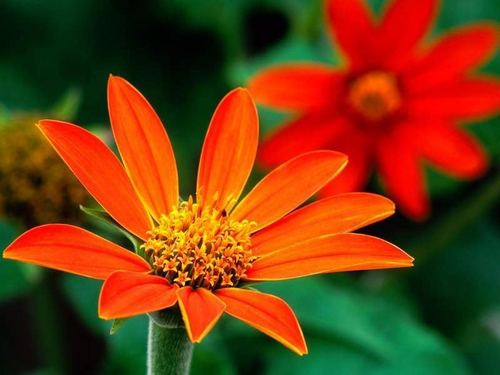 God's beautiful orange flowers