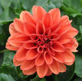 God's beautiful oranje flowers