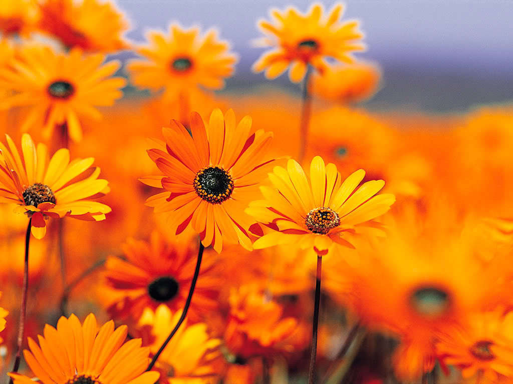 God The Creator Images Gods Beautiful Orange Flowers Hd Wallpaper