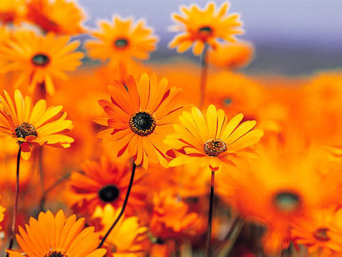 God's beautiful orange flowers - god-the-creator Photo