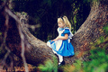I am Alice - sweety-babies photo