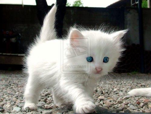 I Liebe cats!