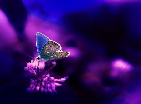 Neon Blue schmetterling