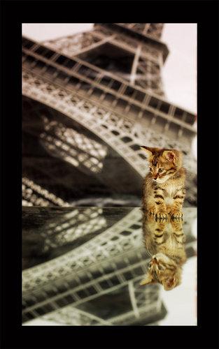 grafick ofice's cat