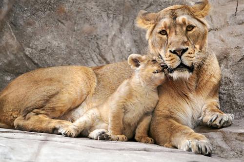 loving mum