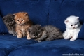 more kitties for us!
