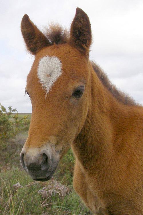 Beautiful horses