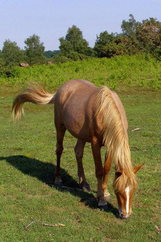 Beautiful घोड़े