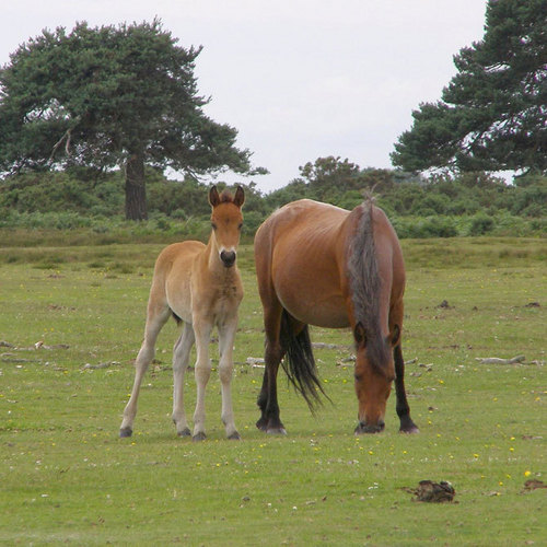 Beautiful ngựa