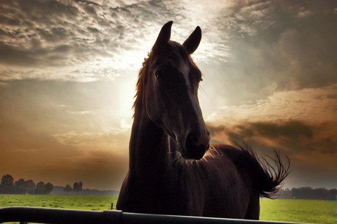 Beautiful horses horses photo 17306069 fanpop for Beautiful horses