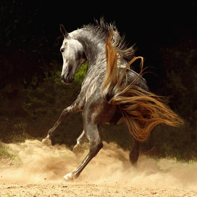 Beautiful horses horses photo 17306125 fanpop page 8 for Beautiful horses