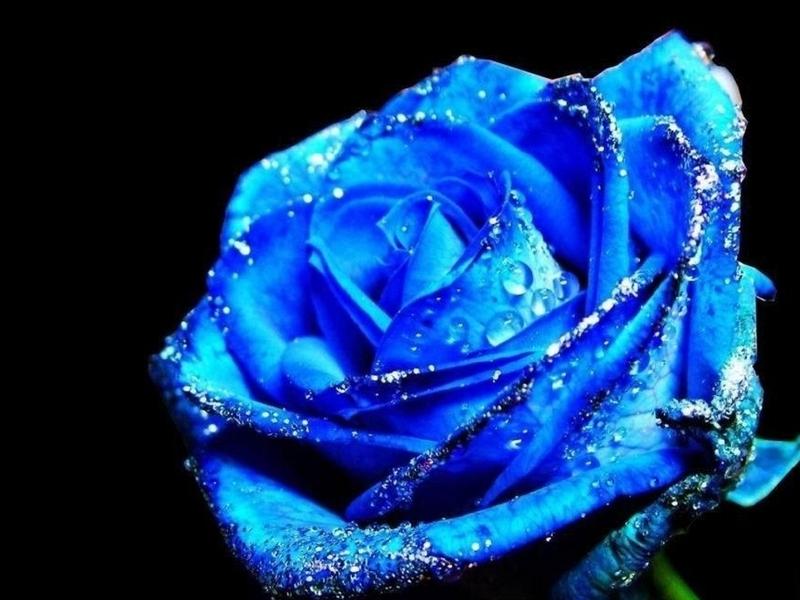 HD Flower Wallpaper Free: Blue Flower Wallpaper