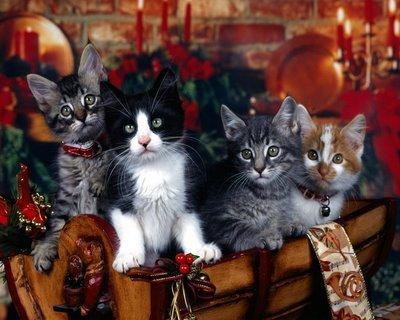 Christmas Cat <3