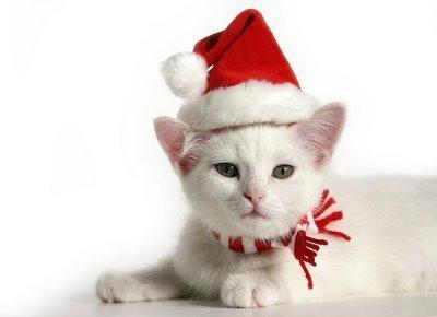 বড়দিন Cat <3