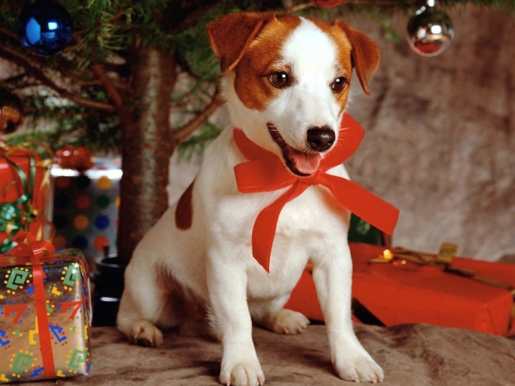 Christmas Dog Wallpaper hd image