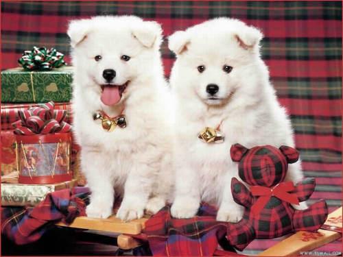 क्रिस्मस dog वॉलपेपर