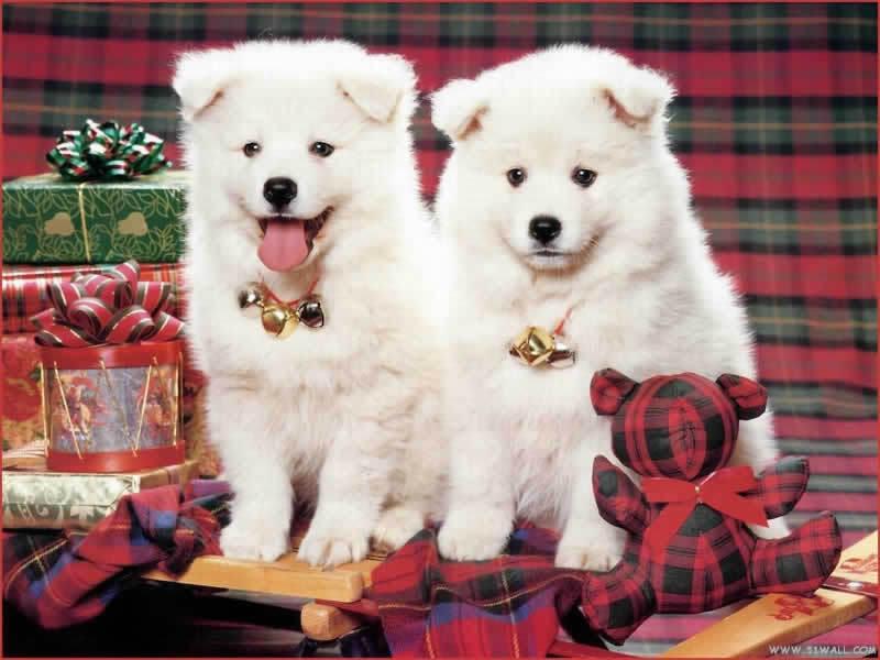 Teddybear64 images Christmas dog wallpaper HD wallpaper and ...