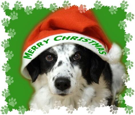Cute Dog Christmas Cards
