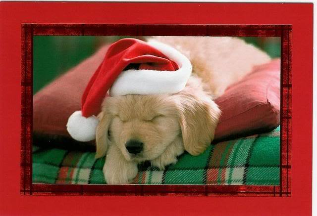 four paw savings just for fun cute holiday puppies