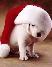 क्रिस्मस pet
