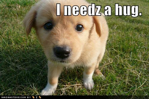 Cute pups with funny captions!