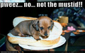 Cute pups with funny captions! - teddybear64 photo
