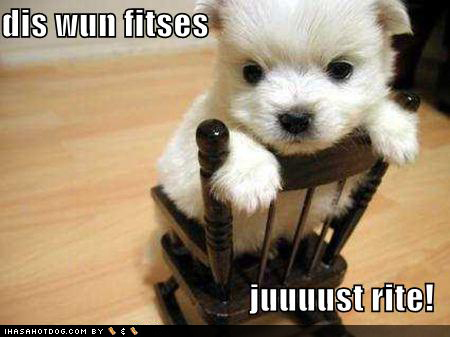 Cute Puppies with Captions